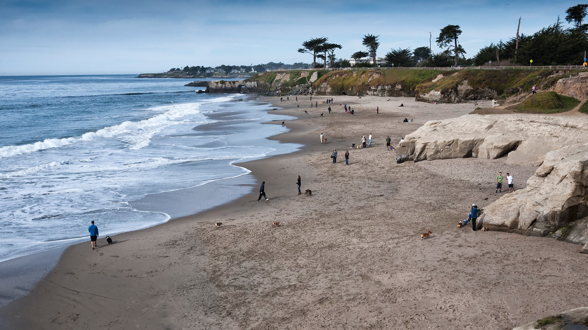 Dog Beach в Santa Cruz