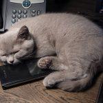 Спим с Андроидом – программы для анализа сна