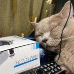 «Киса-киса, где ты?» — обзор GPS-трекера для животных
