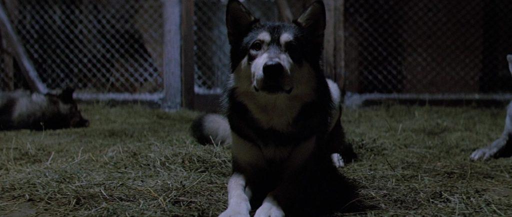 """Кадр из х/ф """"Нечто"""" (1982), собакен, клетка, сено"""