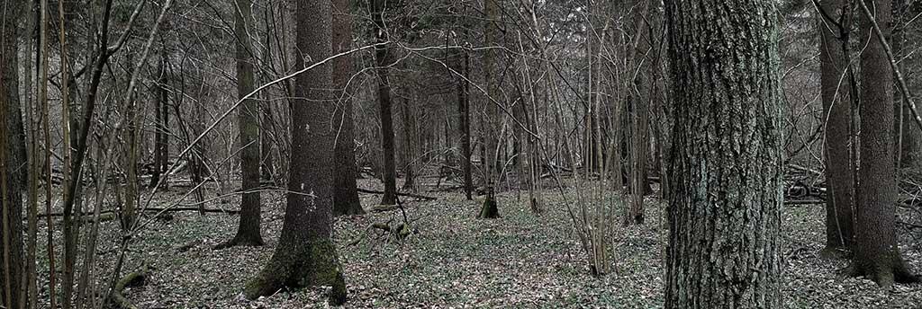 деревья, лес, жуть